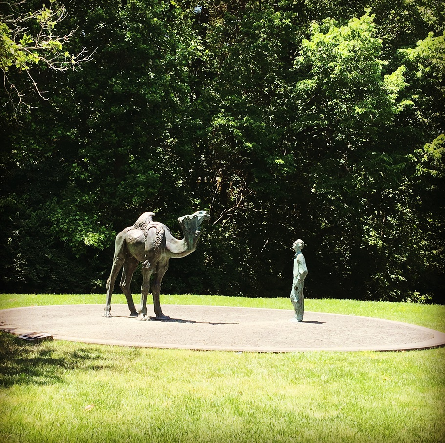 A statue of a Duke biologist Knut Schmidt-Nielsen who studied camels